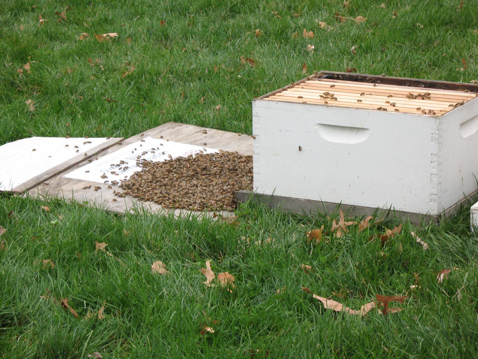 University of Nebraska–Lincoln Entomology Department - bee hives